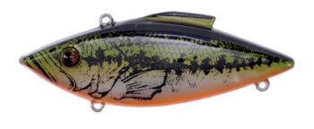 YEARLING BASS ORANGE BELLY-30OB