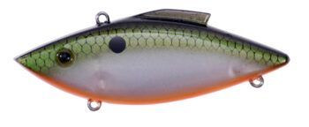 TENNESSEE SHAD (FR39)